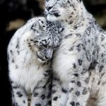 TOP 10 Emotional photos of animals | Top Inspired