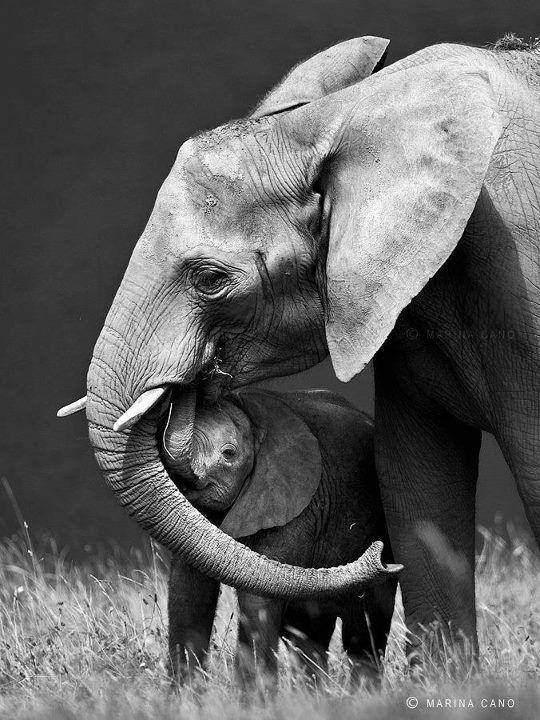 elephants-hug-