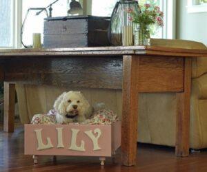 Top 10 Best DIY Pet Projects