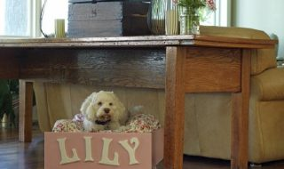 Top 10 DIY Pet Projects   Top Inspired