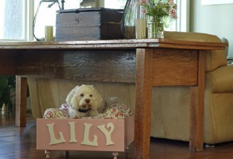 Top 10 DIY Pet Projects | Top Inspired