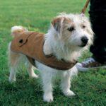Top 10 Cute DIY Pet Clothes | Top Inspired