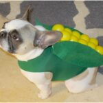 Top 10 Halloween Dog Costumes | Top Inspired