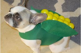 Top 10 Halloween Dog Costumes | Top Inspired