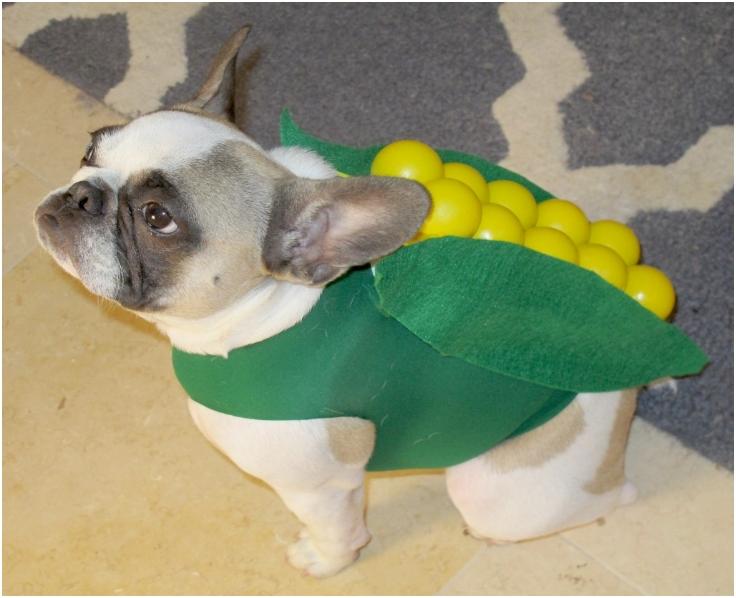 DIY-Dog-Costumes-Part-1