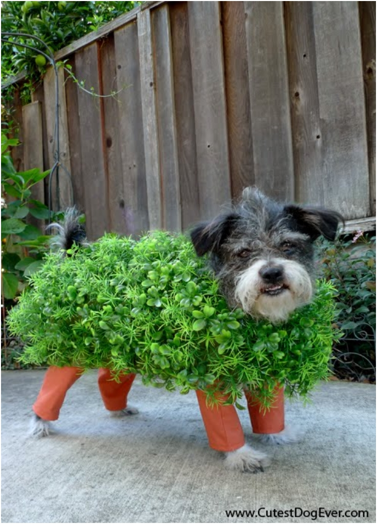How-to-Make-a-Chia-Pet-Halloween-Costume-for-Your-Dog