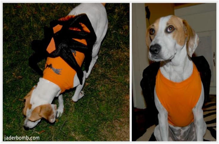 Spider-Dog-Pet-Costume