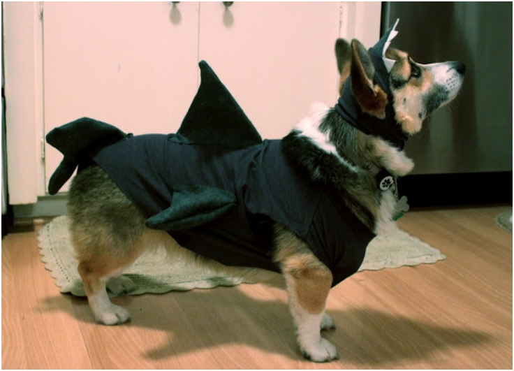 easy-+-cheap-DIY-dog-costume
