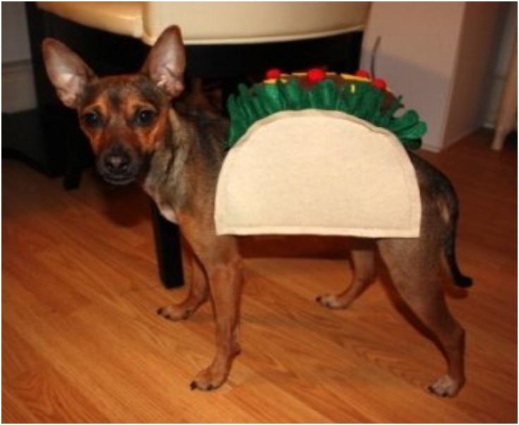 utorial-dog-taco-costume