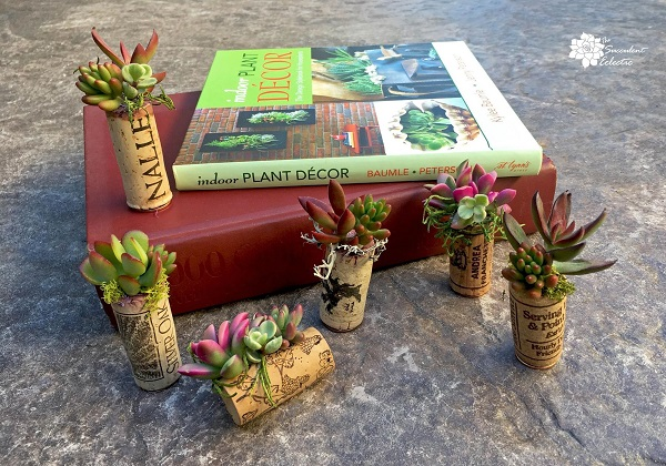 1DIY-Succulent-cork-planters-finished-staged-2-TSE