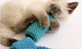 Top 10 Fun DIY Cat Toys | Top Inspired