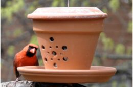 Top 10 Eco-Friendly DIY Bird Feeders | Top Inspired