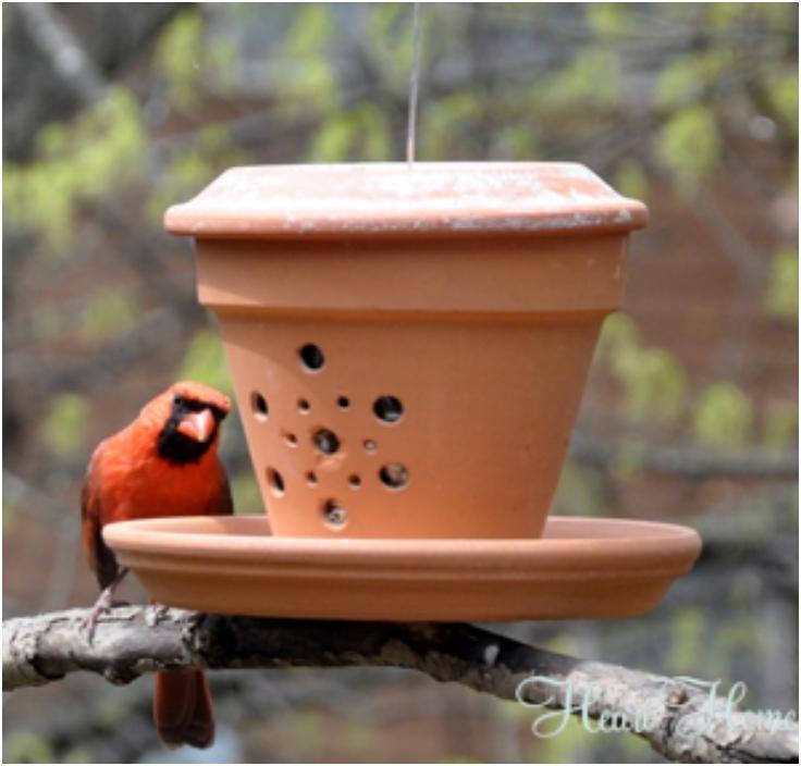 Top 10 Eco-Friendly DIY Bird Feeders | Top Inspired