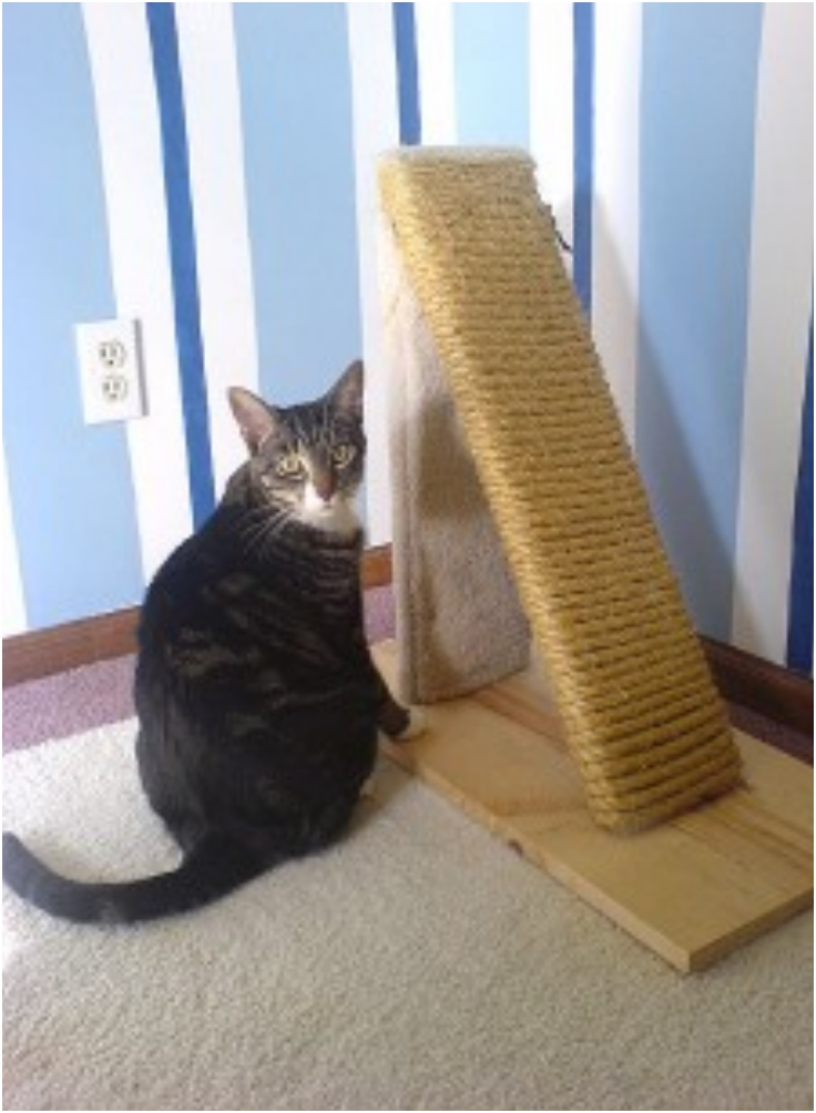 Things For Pets Cat Scratching Post