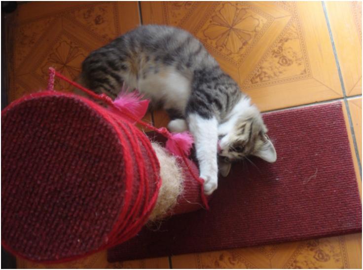 DIY-Cat-Scratching-Post1