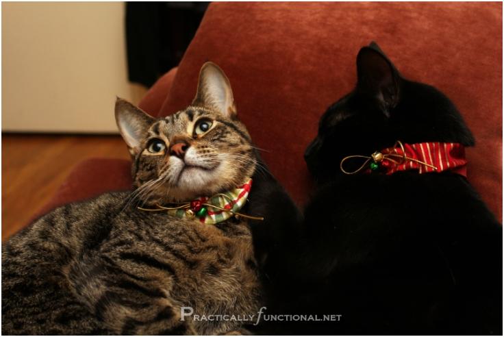 DIY-Christmas-Cat-Collars