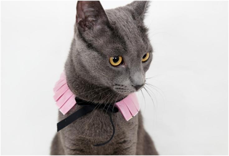 DIY-kitty-cature-ruff-collar