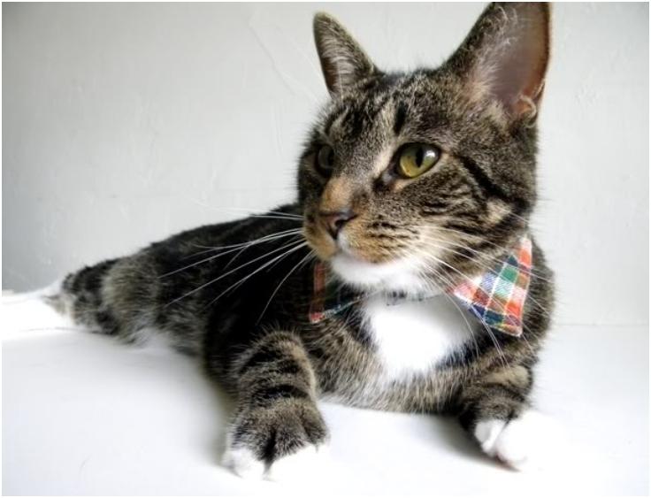 Dapper-Pet-Collar