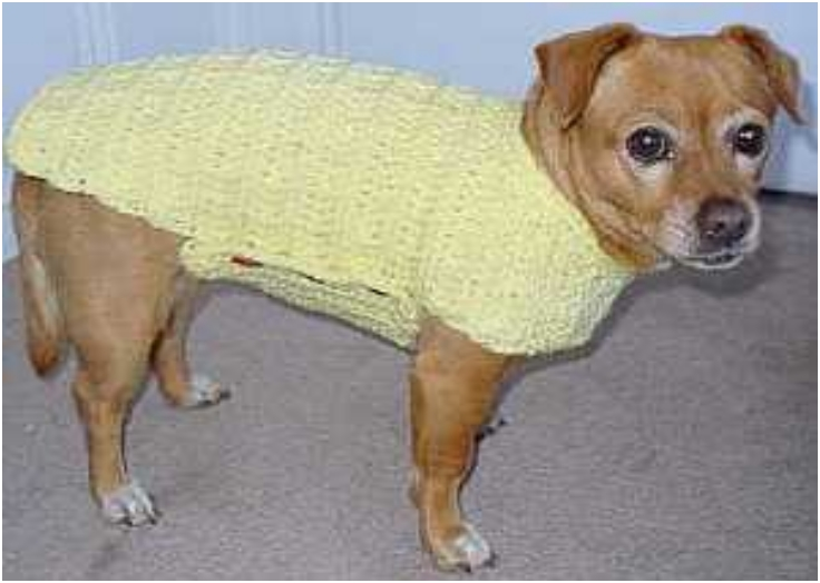 Dog-Sweater-Crochet-Pattern