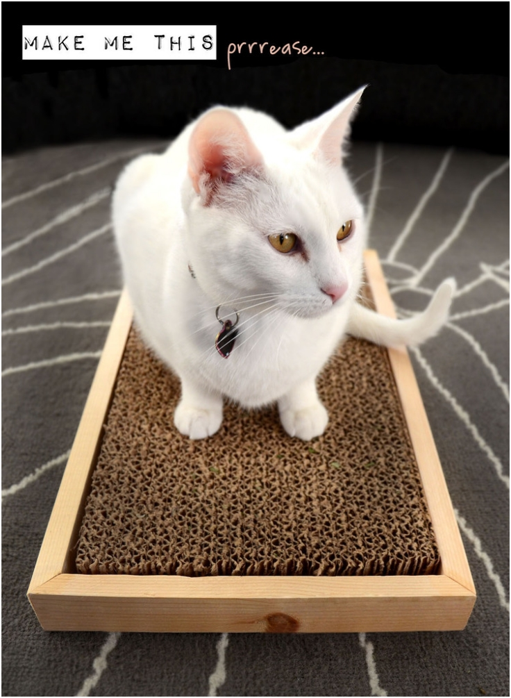 413838653231972699 also Top 10 Diy Cat Scratching Posts And Pads additionally You Got Me A Relaxation Stationscratch also New bubble globe litterrobot likewise Kong Incline Cardboard Scratcher. on cats scratching scratch pad