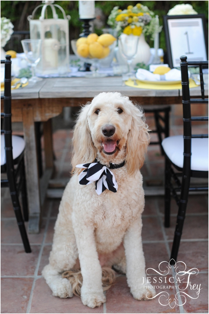 Make-An-Adorable-Special-Event-Flower-Collar-For-Your-Dog