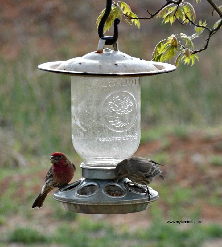 Mason-Jar-Bird-Feeder