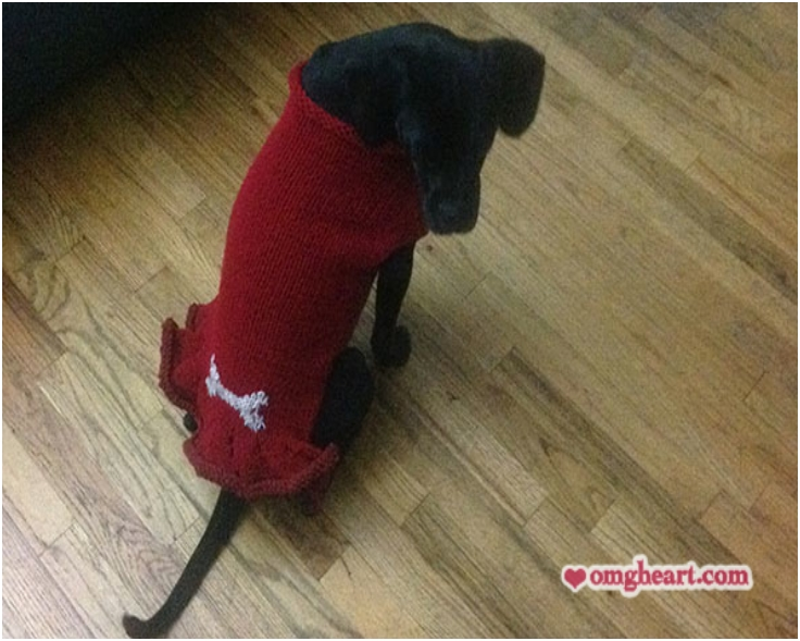 Pattern Pup Squad Dog Sweater