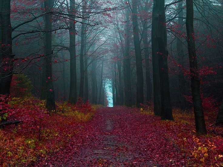 The-Black-Forest-Germany1
