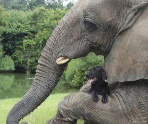 Top 10 Unusual Animal Friendships