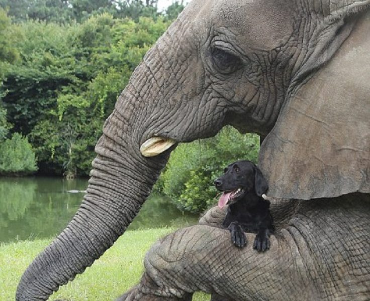 Garden Bush: TOP 10 Unusual Animal Friendships