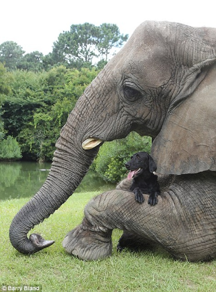 TOP 10 Unusual Animal Friendships | Top Inspired