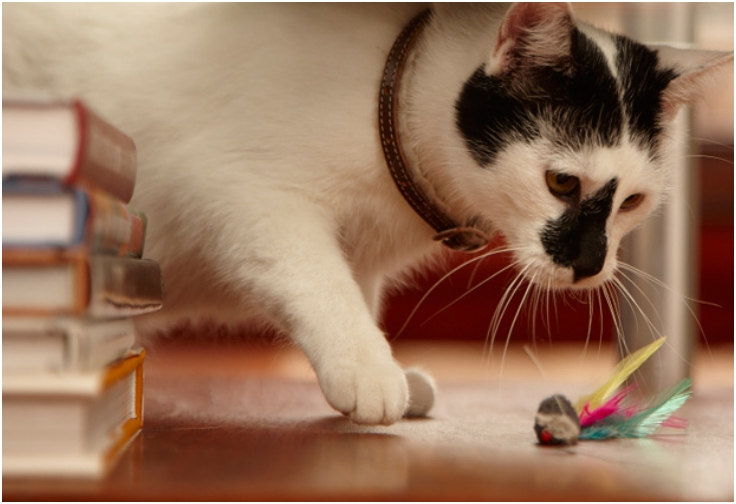 Top 10 fun diy cat toys top inspired for Diy cat wand