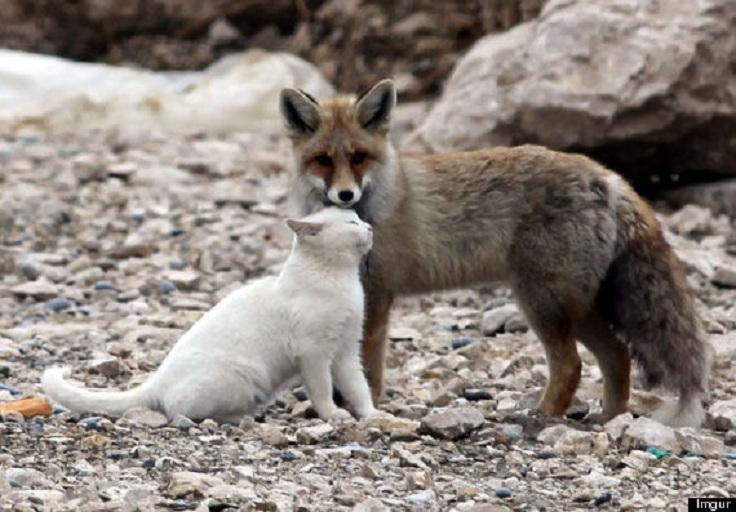 o-FOX-CAT-FRIENDSHIP-570