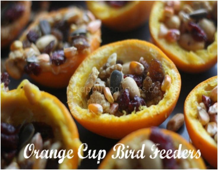orange-cup-bird-feeders