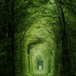 tunnel-of-love-ukraine-amos-chapple-rex-features-150x150