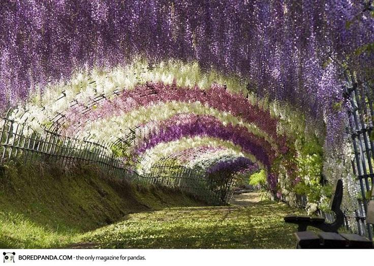 wisteria-flower-tunnel-kawachi-fuji-garden-japan-1-1