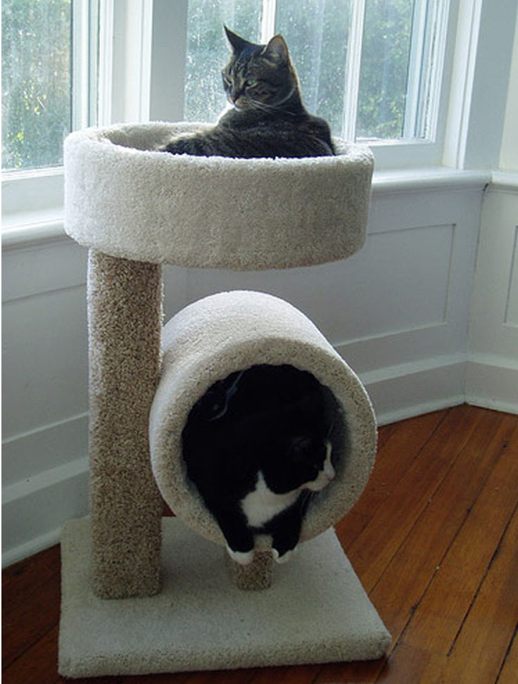 Top 10 Interesting Design Ideas For Pet Spaces Top Inspired