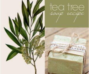 Top 10 Amazing DIY Tea Tree Beauty Products