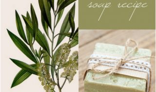 Top 10 Amazing DIY Tea Tree Beauty Products | Top Inspired