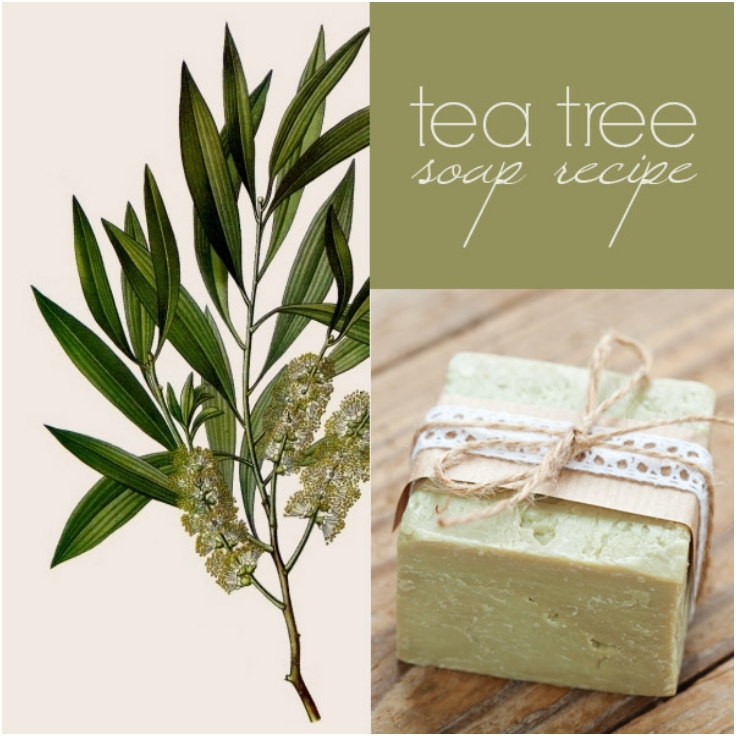 Top 10 Amazing DIY Tea Tree Beauty Products