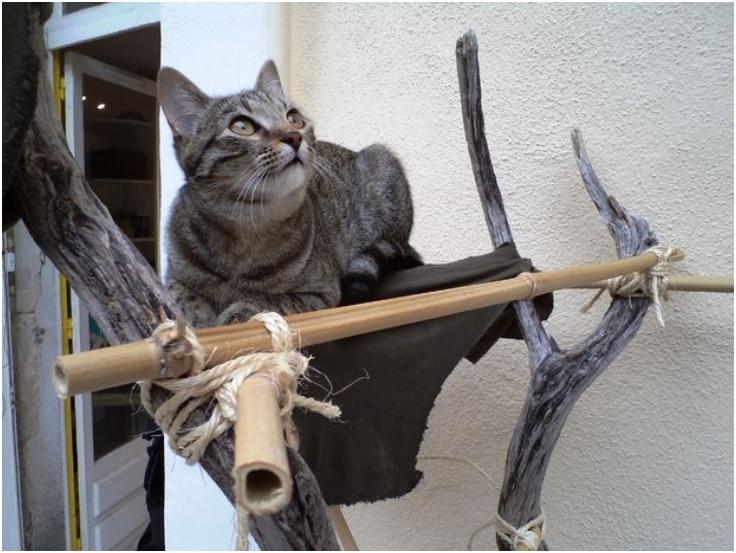 The-Survivalists-Cat-Tree