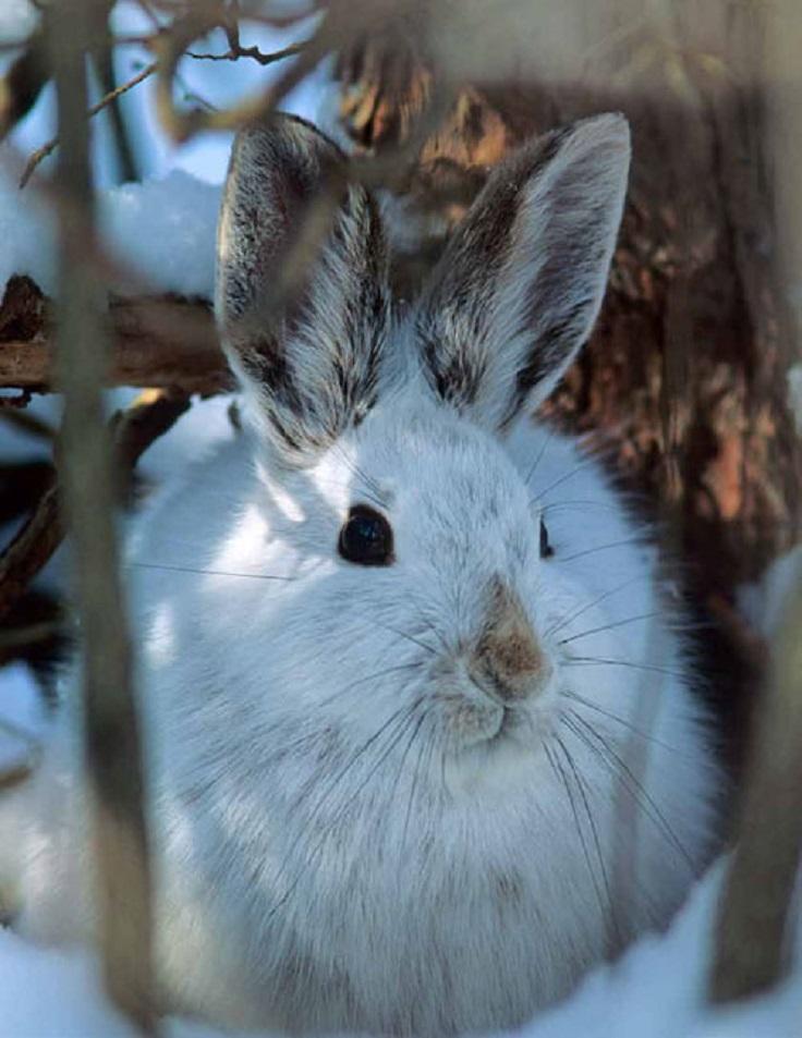 best-winter-wildlife-pictures_01