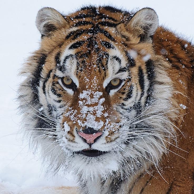 best-winter-wildlife-pictures_02