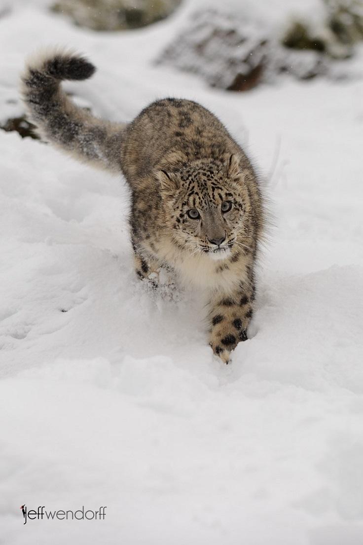best-winter-wildlife-pictures_05