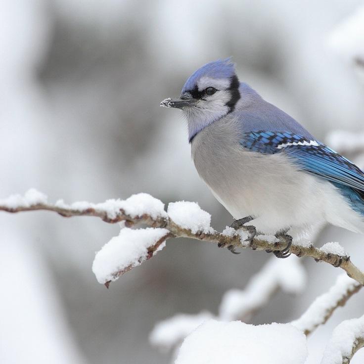 best-winter-wildlife-pictures_06