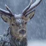 best-winter-wildlife-pictures_09-150x150