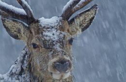 Top 10 Best Winter Wildlife Pictures    Top Inspired