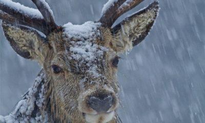 Top 10 Best Winter Wildlife Pictures  | Top Inspired