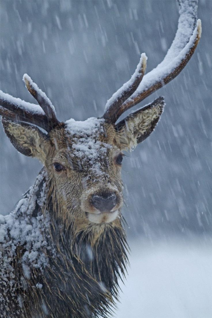 best-winter-wildlife-pictures_09