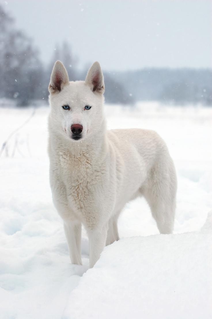 best-winter-wildlife-pictures_10